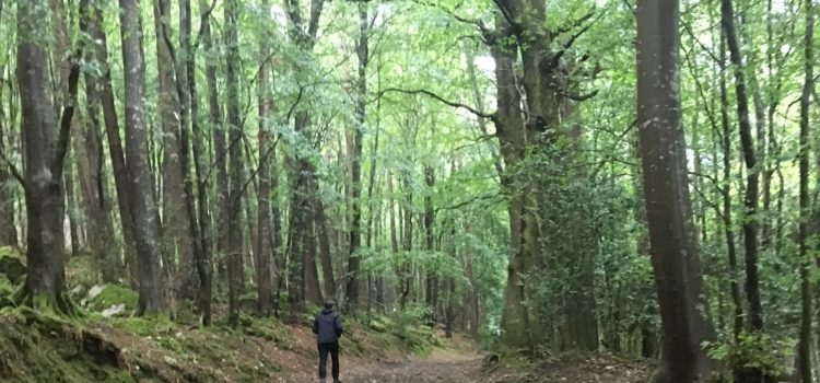 DLR PPN member's walk in Barnaslingan Wood Aug 22nd