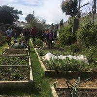 St Brigids Community Garden